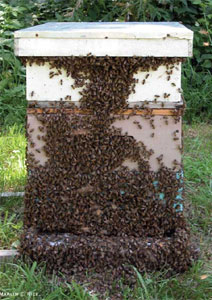 http://www.vuatkerala.org/static/mal/advisory/agri/apiculture/introduction.htm